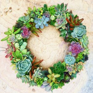 10 inch succulent wreath