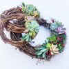 grapevine succulent wreath