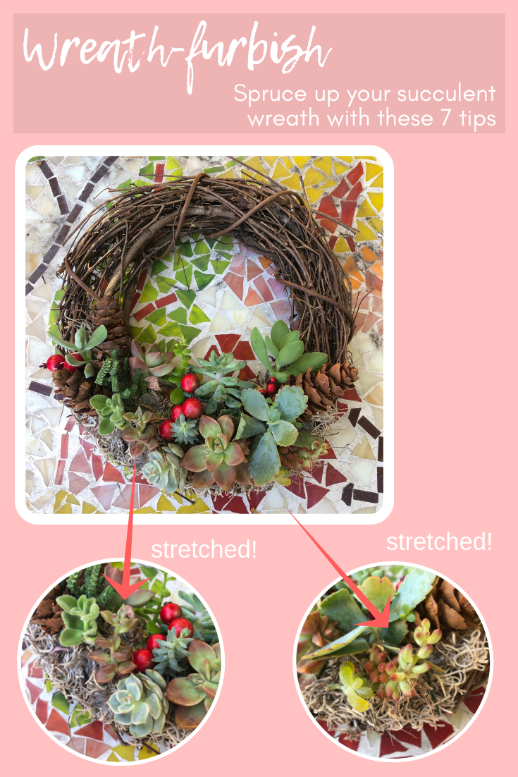 succulent wreath furbish