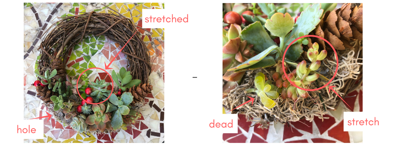 succulent wreath repair