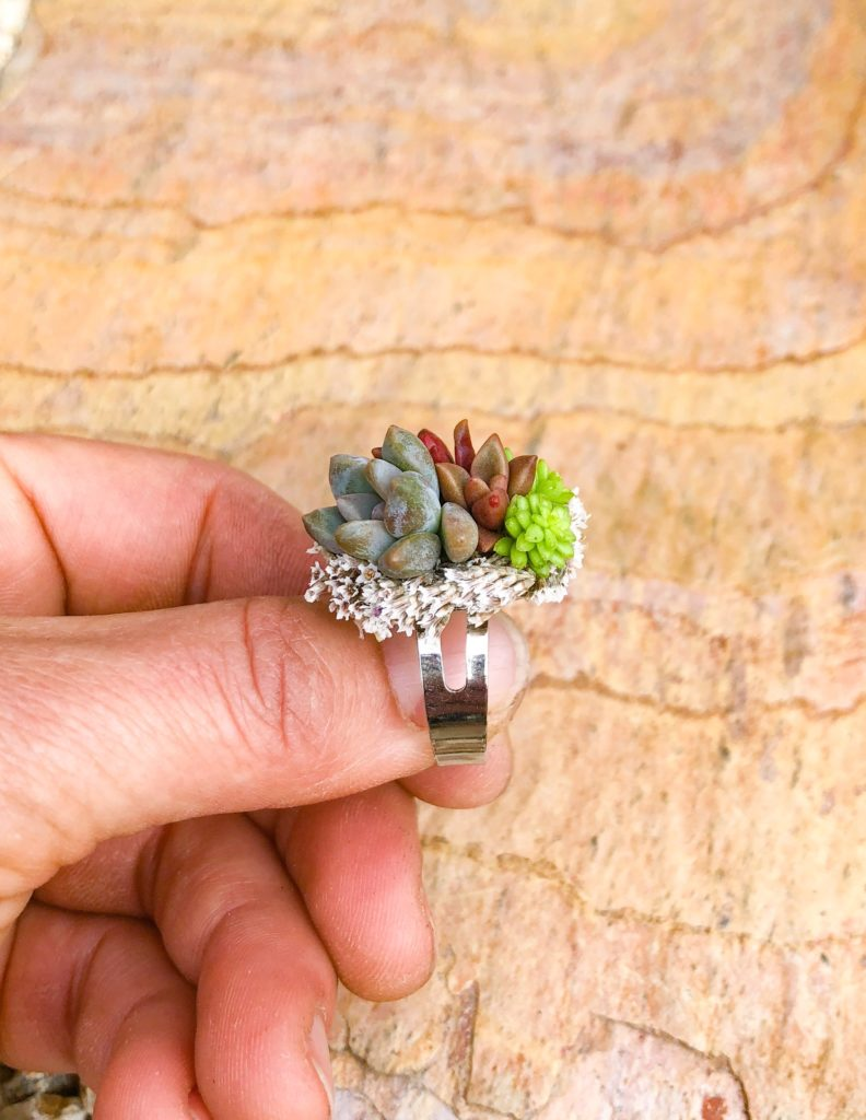 succulent ring succulent jewelry