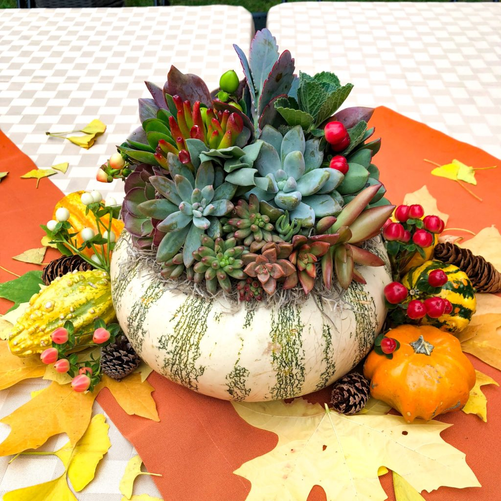 succulent pumpkin for fall home decor, holiday decorations, fall decoration, creative workshop idea