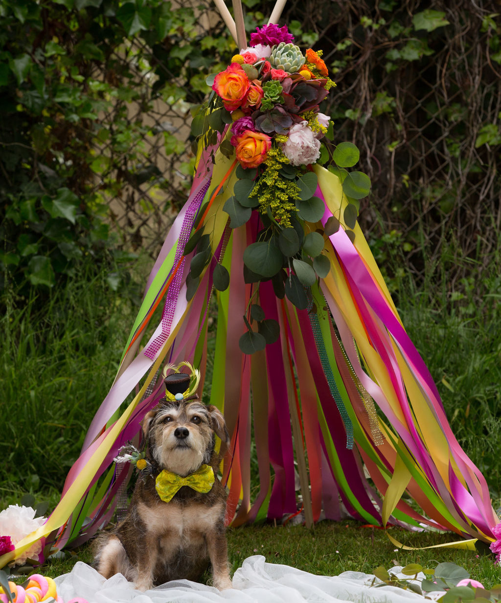 dogs wedding attire kicked up a notch with a succulent dog collar succulent wreath and a tiny hat by two back flats