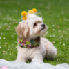 Dog Bride succulent floral collar