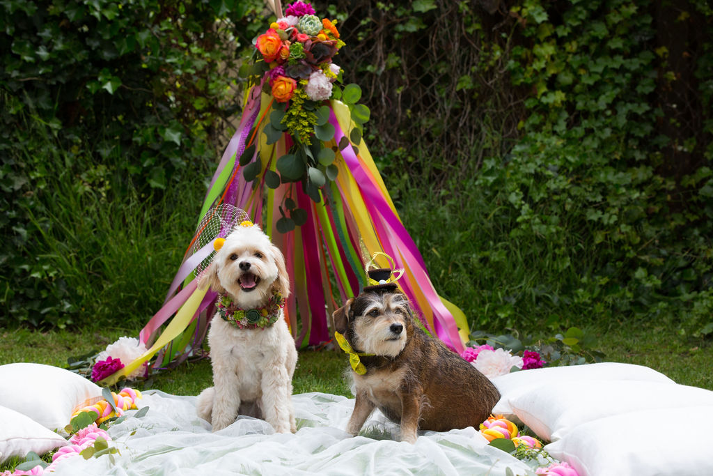 dogs at weddings1