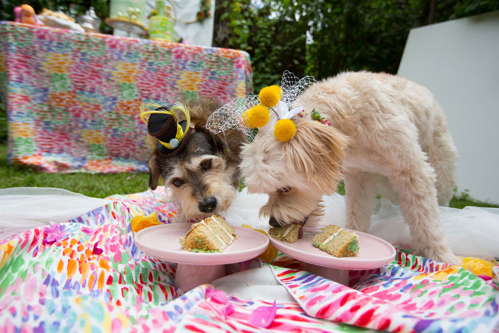 two dogs get married at their own wedding. dogs at weddings are the new it thing