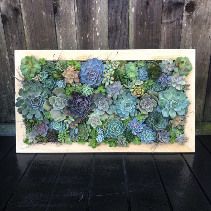 colorful vertical succulent garden (outdoor)